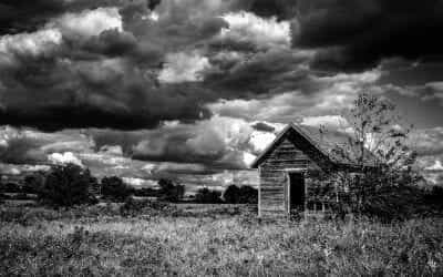 Lonely Shed